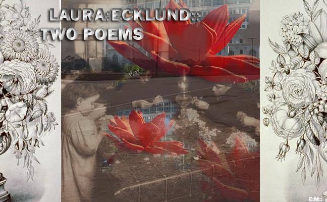 LAURA ECKLUND
